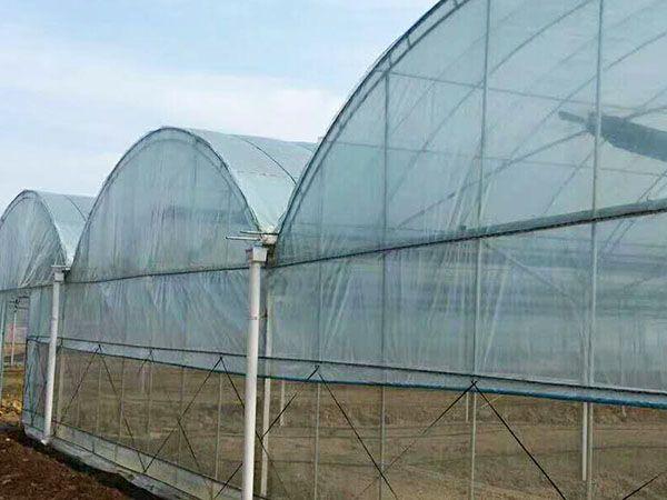 薄膜連棟溫室建造